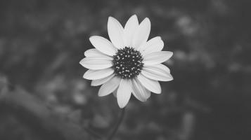 f4-daisy